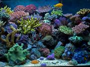 2-2a_aquarienportraet57