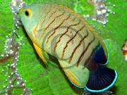 2-2d_aquarienportraet57